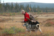 Leif Johansson with a bull moose (Photo: Jessica Jonasson)