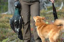 Hunts may include both game birds and moose (Photo: Leif Johansson)