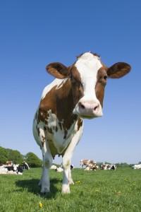 """肉类很快就能由实验室来""""制造""""?听起来像是一个梦。"""