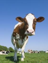 人造肉类食品?