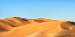 欣欣向荣的沙漠