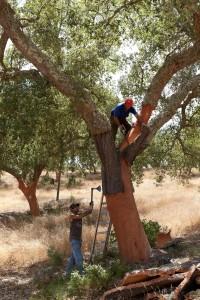 用软木增强建筑隔热性能