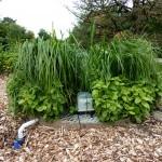 自家花园里的污水处理
