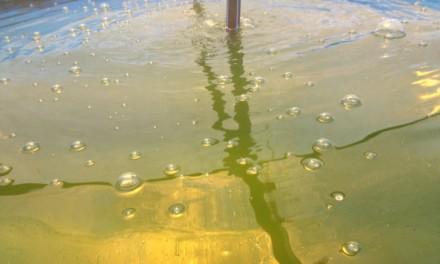 微藻利用烟气和废水生长繁殖