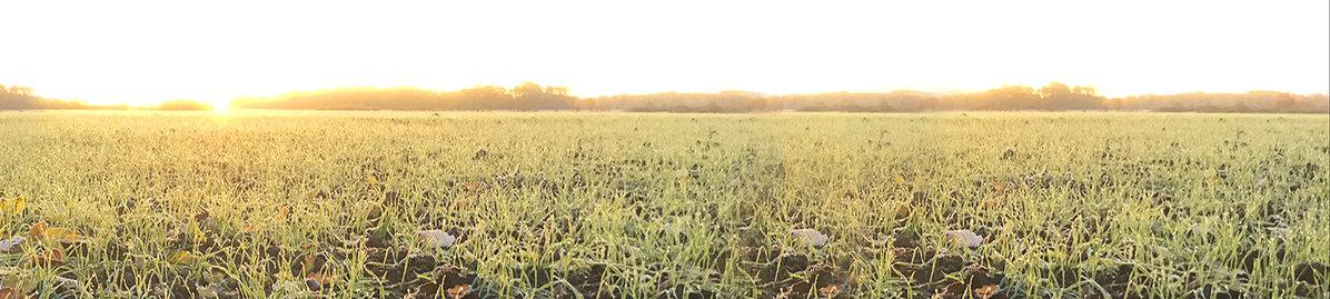 剑指有机循环农业