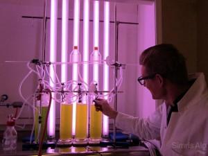化石燃料替代品-海藻油?